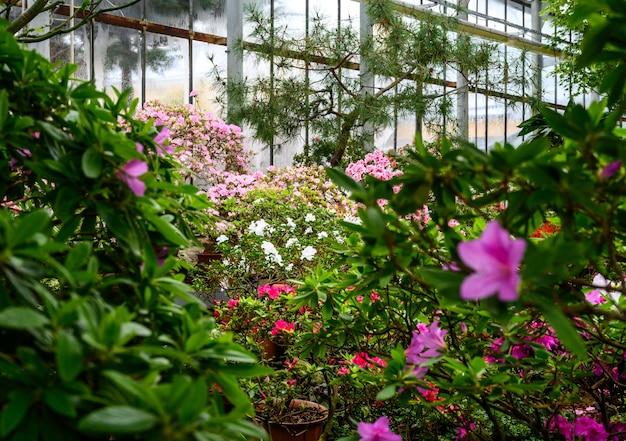 식물의 아름다운 밝은 색상. 식물원. 아름다운 녹색 식물. 밝은 꽃.