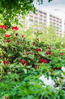 도시의 아름다운 밝은 색상, 도시 경관의 조경 및 꽃 장식