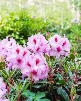街の美しい明るい色、街の景観の造園と花の装飾