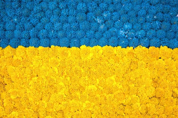 Красивый яркий цветочный фон из желтого бархатца, синие луковицы allium, фиолетовый flo