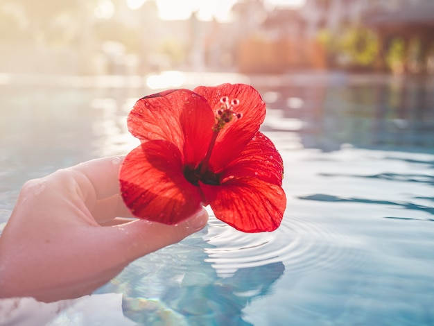 Beautiful, bright flower on the background of the pool