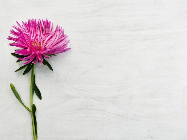 木製のテーブルの上に横たわる美しい、明るい花。上からの眺め、クローズアップ