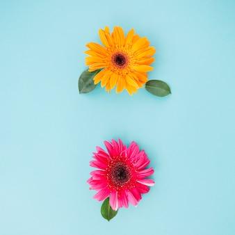 Красивые яркие цветы на синем