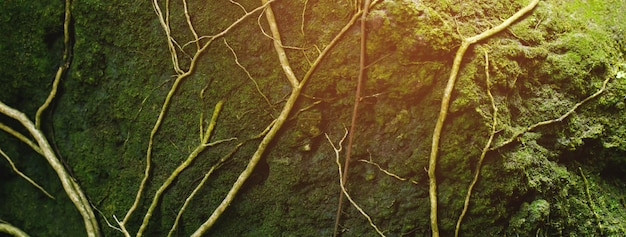 育った美しい明るい緑の苔が荒い石と森の床を覆っています。マクロビューで表示します。壁紙のための自然の中で苔の質感に満ちた岩。