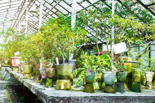 아름 다운 밝은 녹색 진달래는 도시 공원, 봄, 여름 정원에 심기 위해 준비된 온실에서 냄비에 묘목을 심습니다. 원예 및 조경 개념.