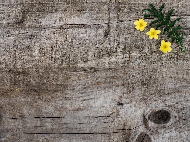 Красивые, яркие полевые цветы лежат на столе