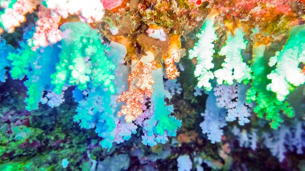 Beautiful, brightly colorful soft corals in cave, maldives.