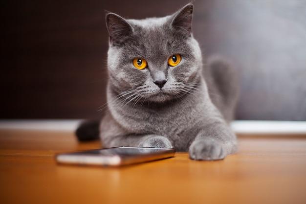 美しいブリティッシュショートヘアの猫は電話で床に横たわっています。
