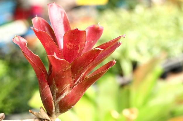 Beautiful bromeliad in tropical