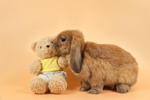 Beautiful brown bunny rabbit kissing cute doll
