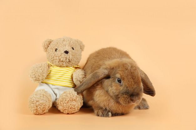 Beautiful brown bunny rabbit with cute bear doll