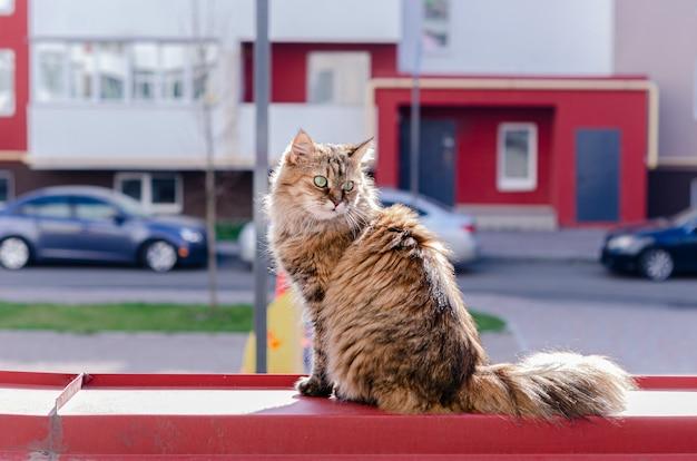 Красивая коричневая пушистая домашняя кошка греется на солнышке на балконе.