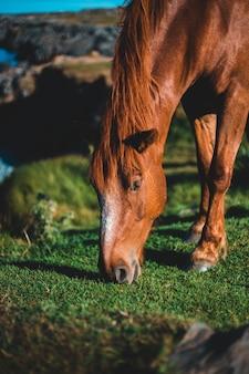 美しい茶色の馬のクローズアップ