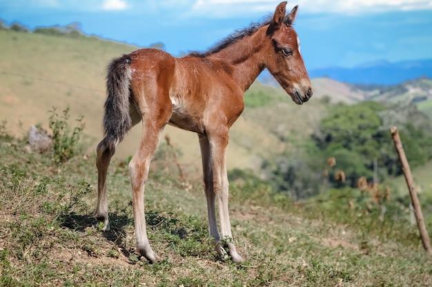 Красивый коричневый конь детеныш