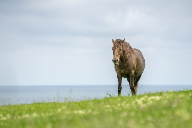 Beautiful brown horse on the grass field