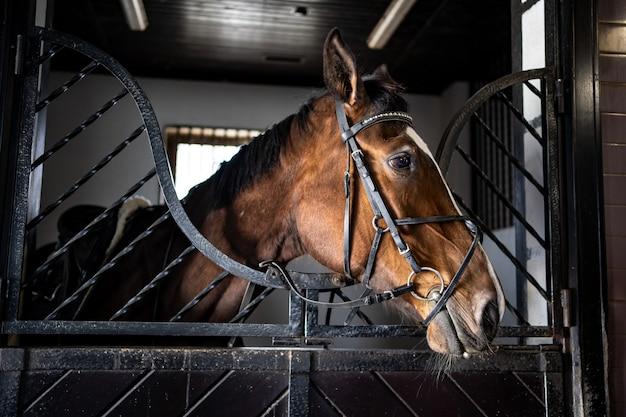 Красивая коричневая лошадь в стойле в конюшне. конный клуб и занятия верховой ездой.