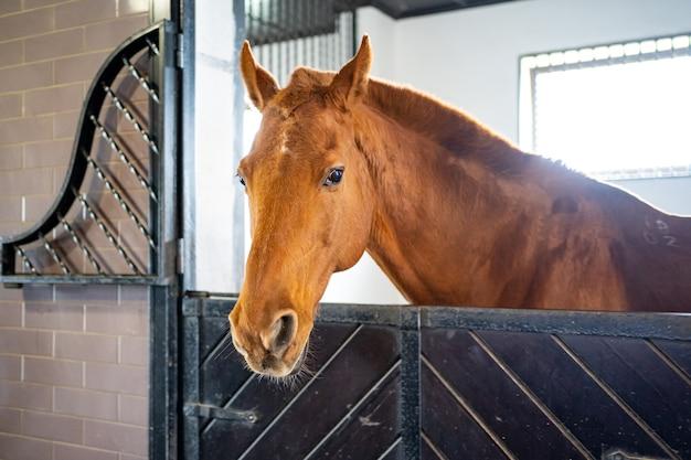 厩舎の屋台で美しい茶色の馬