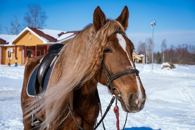 Красивая коричневая лошадь в упряжке стоит снаружи
