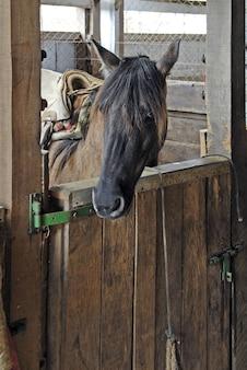 納屋の美しい茶色の馬