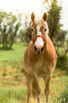Красивая коричневая лошадь на поле