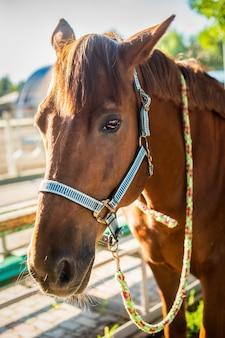 牧場でチームと美しい茶色の馬。