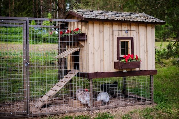Красивый коричневый деревянный курятник на ферме