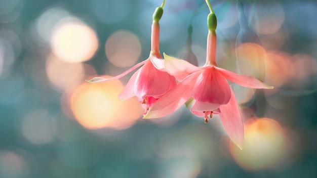 ナチュラルグレーの上に咲くピンクと白のフクシアの花の美しい束