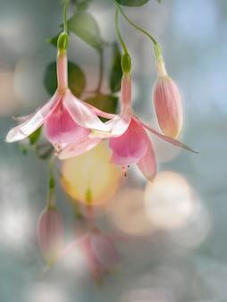 피는 분홍색과 흰색 자홍색 꽃의 아름다운 무리