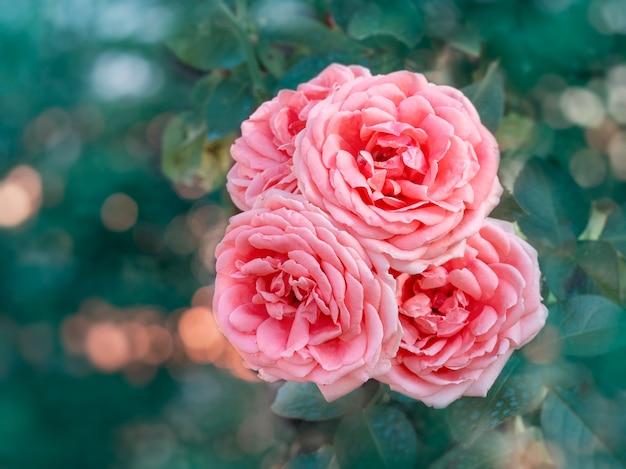 自然の緑の背景に咲くピンクのバラの花の美しい束。コピースペースと花の背景。