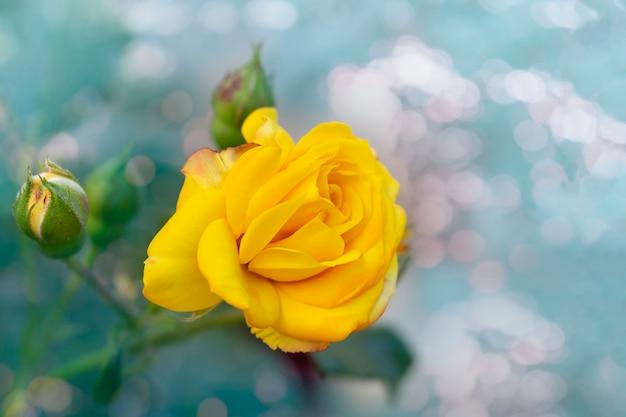 咲く黄色いバラの花の美しい束
