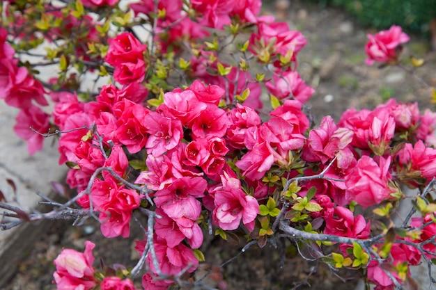 赤い花と美しい茂み。