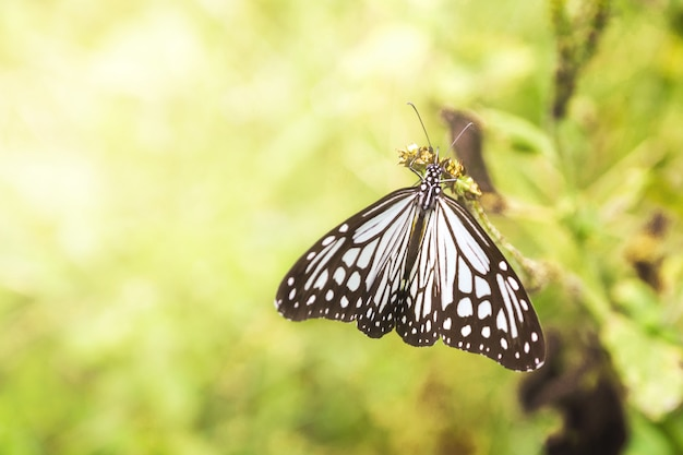 Beautiful butterfly catch on flowers with bokeh background light, natural for background.