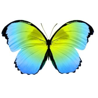 Красивая бабочка окраса «спаржа». изолированные на белом фоне