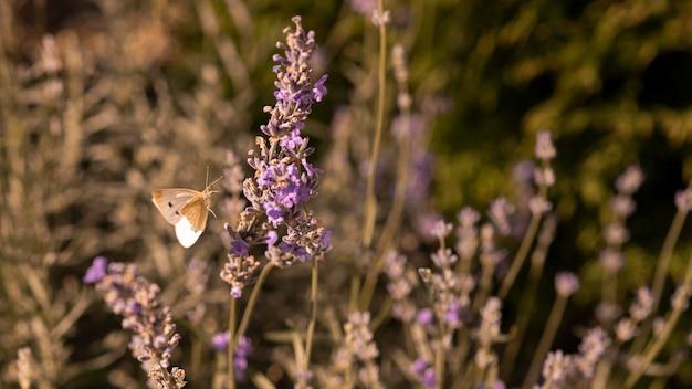 Bella farfalla sul fiore in natura