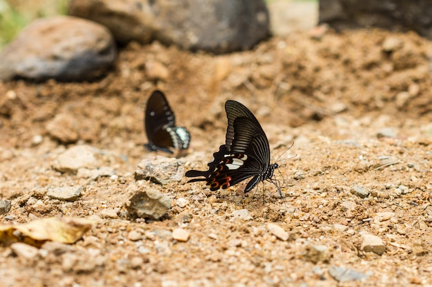 Beautiful butterfly on ground in tropical forest