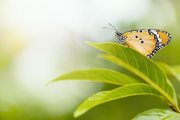 自然の中で美しい蝶。動物/自然の背景。