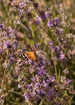Красивая бабочка в природе концепции