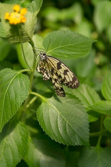 Beautiful butterfly, insect on green nature background, photographed at schmetterlinghaus,