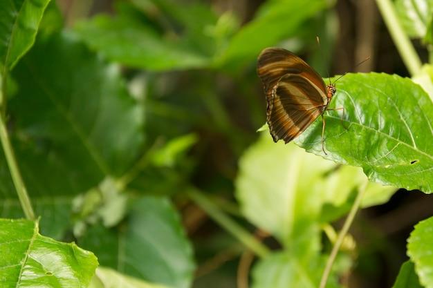 Красивая бабочка, насекомое на фоне зеленой природы, сфотографировано в шметтерлингхаусе,