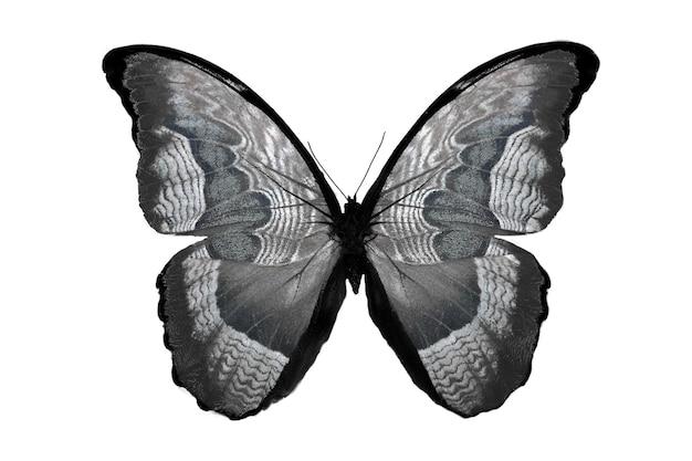 Красивая бабочка, изолированные на белом. разноцветное насекомое. тропическое животное. шаблон для дизайна