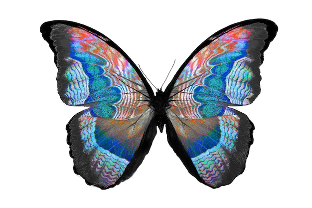 Beautiful butterfly isolated on white. multicolor insect. tropical animal. template for design