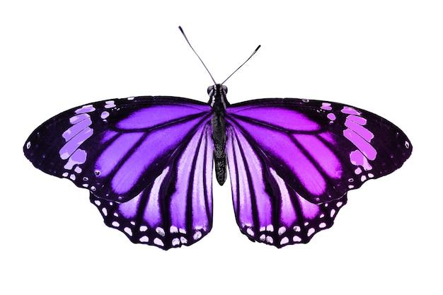 孤立した美しい蝶