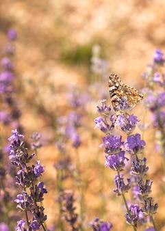 Bella farfalla nel concetto di natura