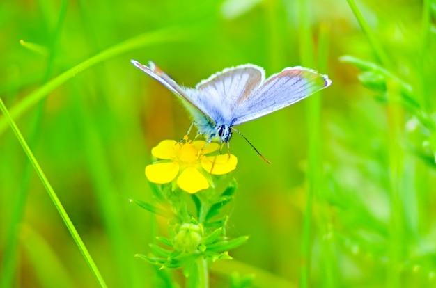 Красивая бабочка на цветке