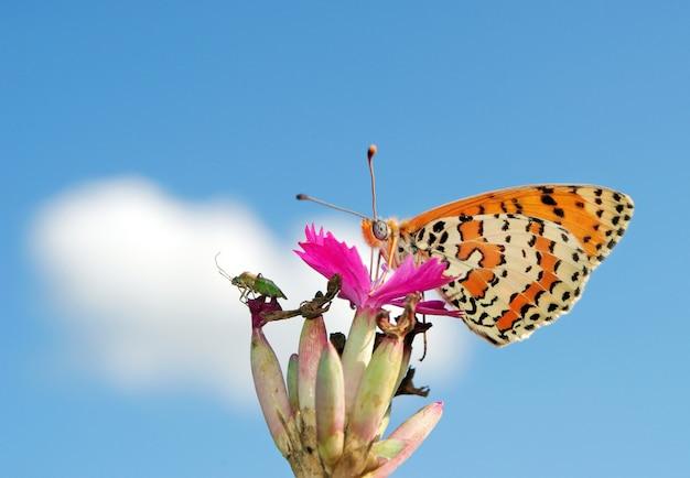 牧草地の美しい蝶
