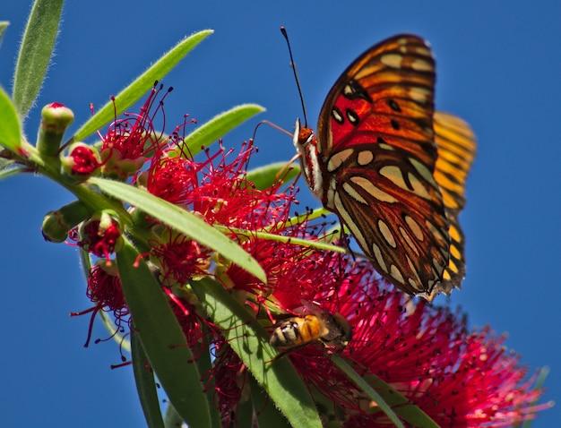Красивая бабочка на растении