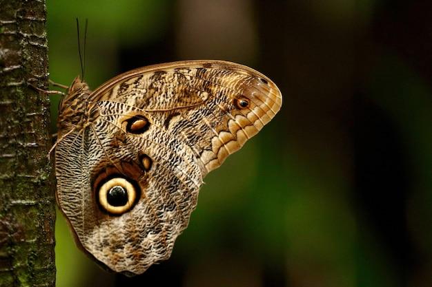 Красивая бабочка на дереве