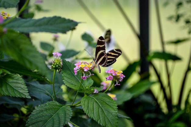 花の美しい蝶