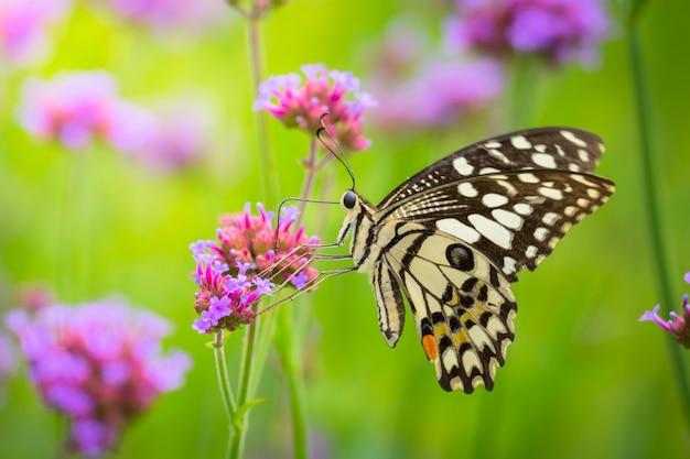 Красивая бабочка на красочный цветок