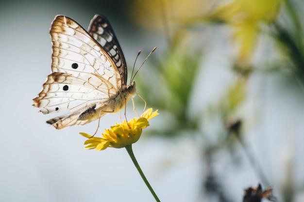 Красивая бабочка на одуванчике